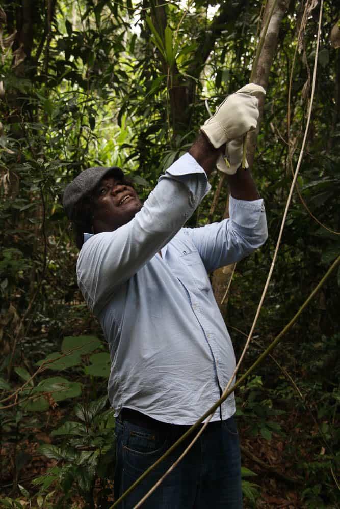 Abe Muriata collecting lawyer cane, Bilyana, 2012, photo: Valerie Keenan, Girringun Aboriginal Art Centre