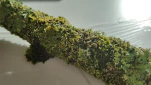 Amanda Brooks, Within Nature 1 (Before), A twig with moss and lichen, photo: Amanda Brooks