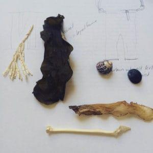 Jesika Dawnn, Silt Dream Series - Bone, Brine, Bundle (Before), 2016, Found bird bones, sea shells and sea weed, photo: Jesika Dawnn