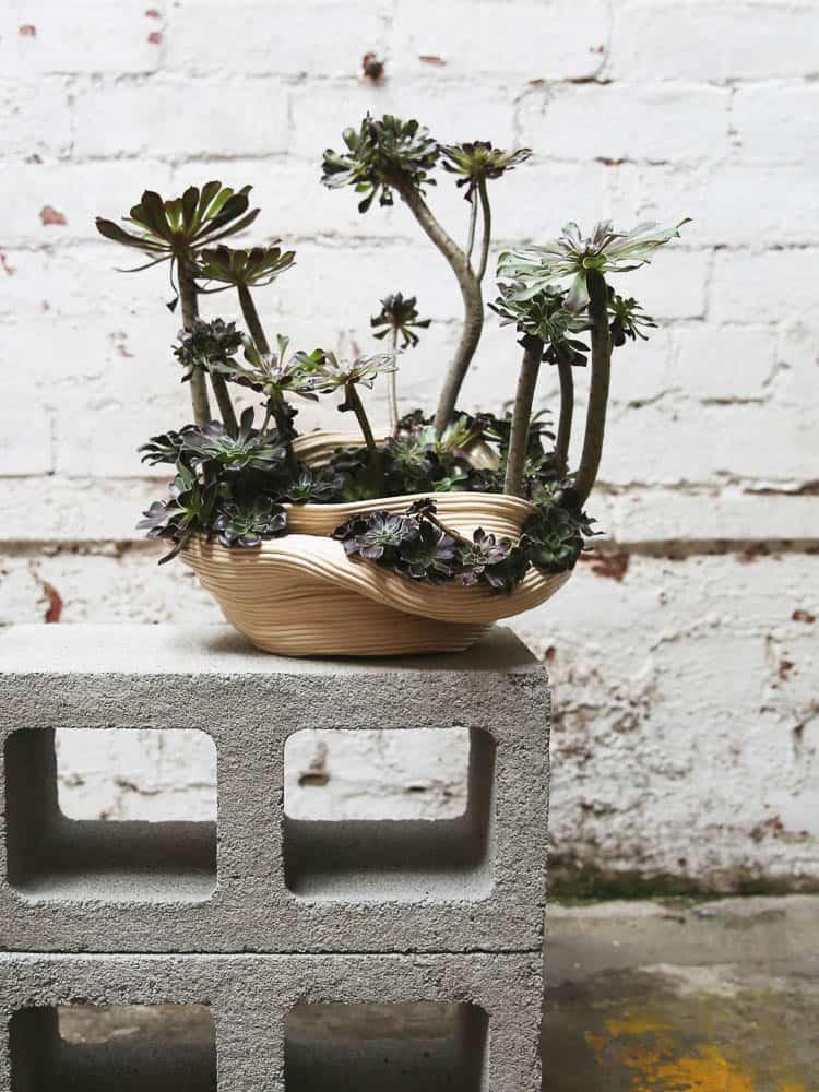 Zhu Ohmu, 植物繕い - Plantsukuroi (After), 2015, Ceramics, Aeonium Arboreum, 50 x 35cm, photo: Zhu Ohmu, made in Melbourne, Australia