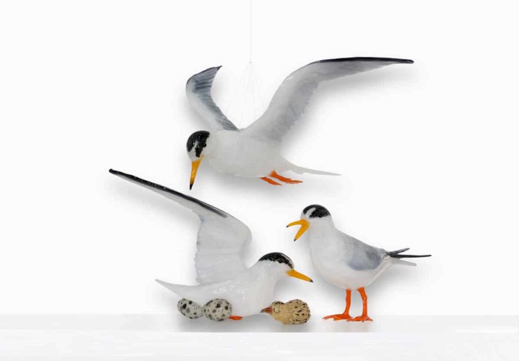 Mark Eliott, Little terns, 2013, glass, photo: Richard Weinstein. This was a work exhibited in the Glass Lifeforms exhibition Pittsburgh US 2013. photographers were Mark Eliott and Roberto Cela Improvisation in Red Spikes was made between 2007 and 2012.