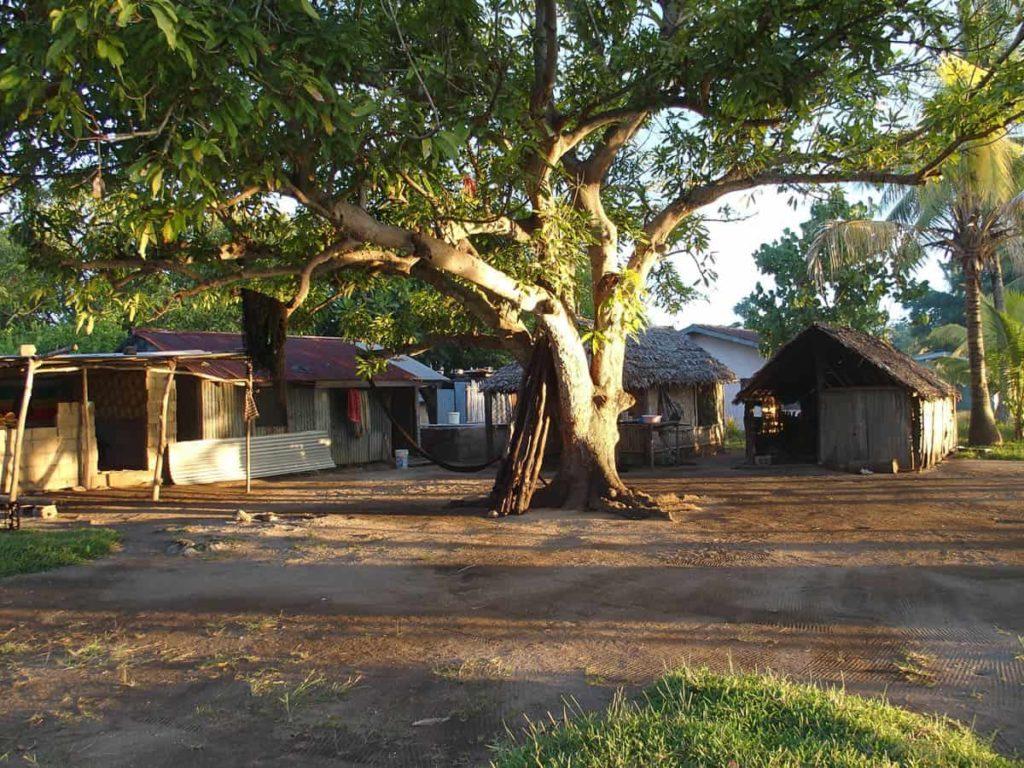 Lutes, Vanuatu