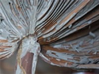 marisa georgiou, palm leaf rug (before 2), palm tree leaf, photo: marisa georgiou