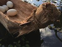 shaun edwards, paperbark coolamon (after), kunthérr – paperbark, boxwood, coconut husk string, freshwater crocodile eggs, 25.4 x 45.72 x 15.24cm, photo: shaun edwards, made in cairns, australia
