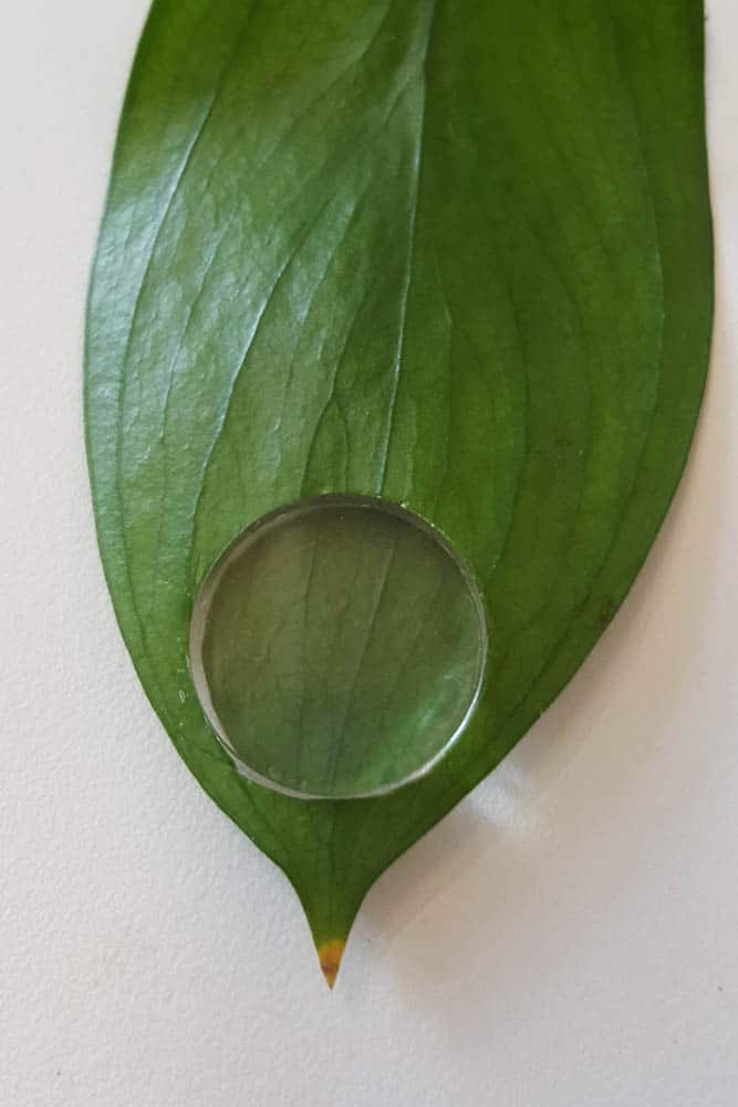 Amanda Brooks, Within Nature 5 (Before), Leaf, Perspex Disc, photo: Amanda Brooks