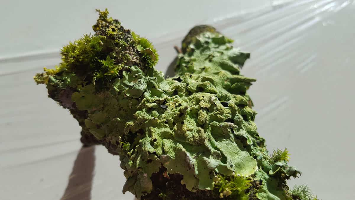 Amanda Brooks, Within Nature 4 (Before), A twig with moss and lichen, Photo: Amanda Brooks