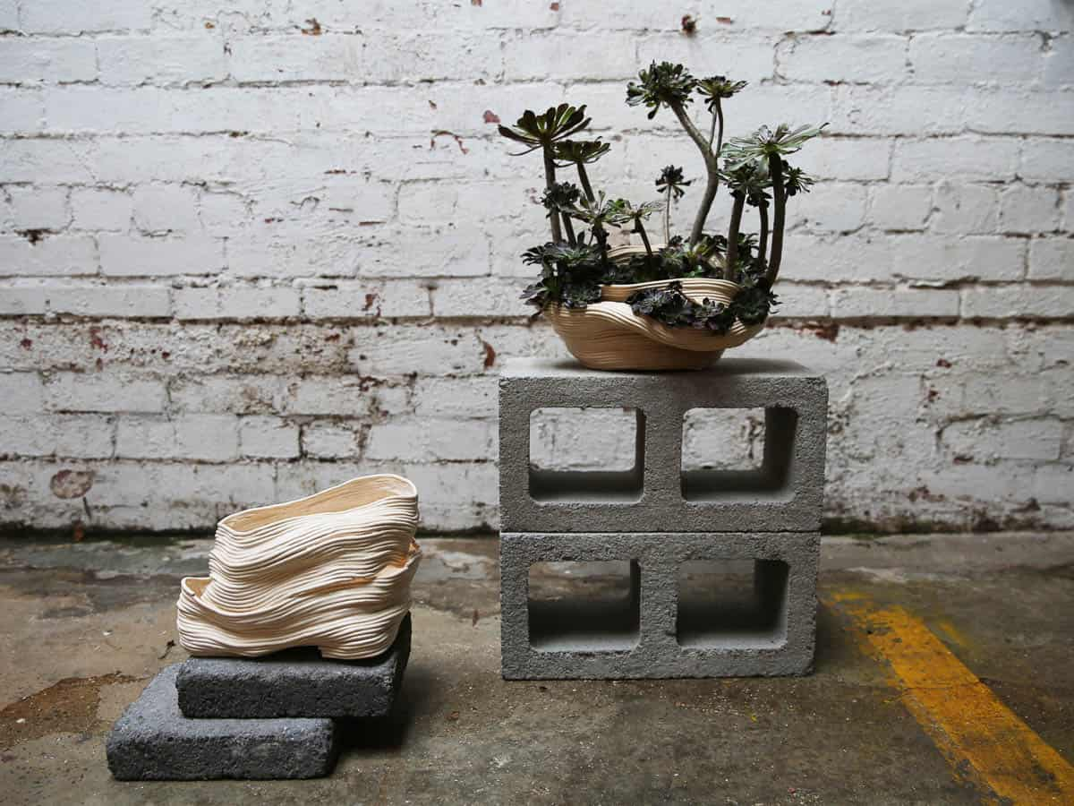 Zhu Ohmu, 植物繕い - Plantsukuroi (Before and After), 2015, Ceramics, Aeonium Arboreum, 50 x 35cm, photo: Zhu Ohmu, made in Melbourne, Australia