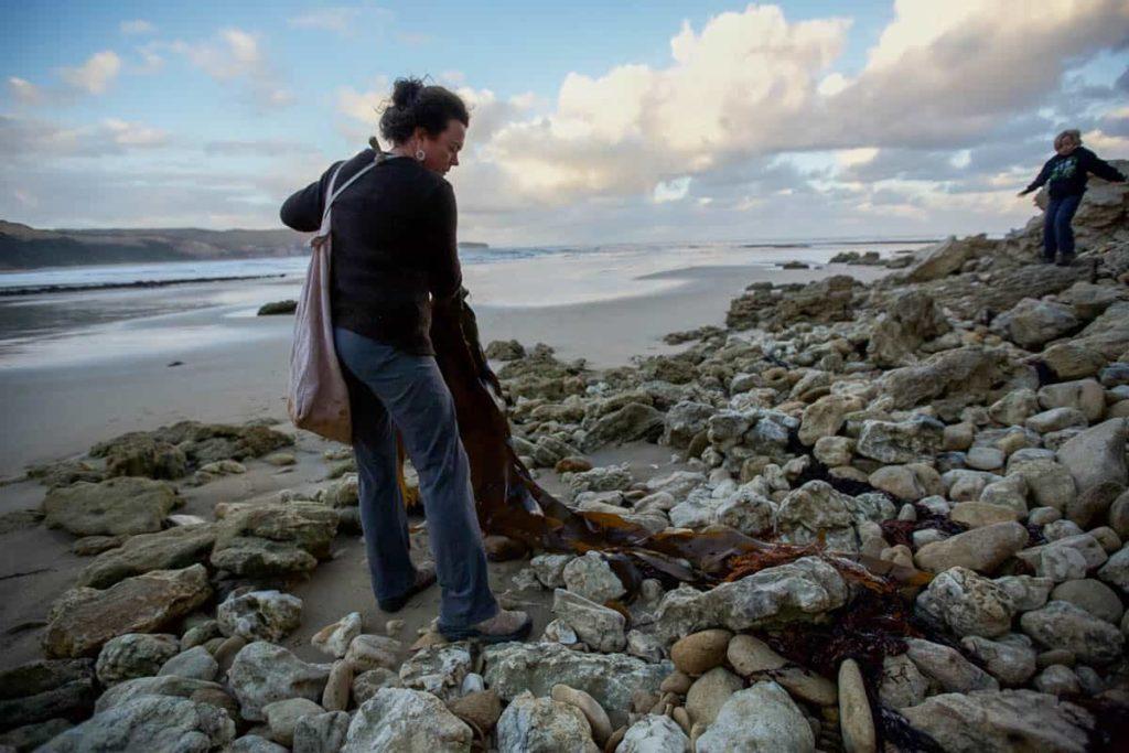 Jenny Crompton, Collecting kelp
