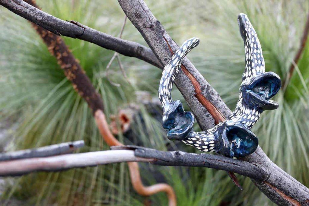 Penny Evans, Blue Swamp Banksia, 2017