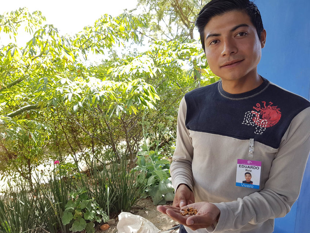 Eduardo Ruiz holding the seeds for the stock of copal trees being planted to supply alebrije makers in twenty years time.