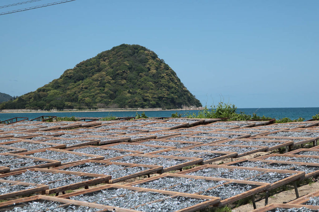 Drying fish by the sun and the breeze from the sea, 2018; photo: Yoko Ozawa